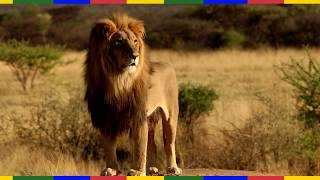 Топ 10 необычных отношений человека и животных / Отношение человека к животным