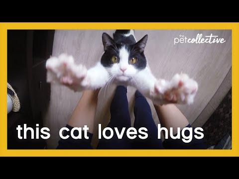 החתול המחבק: סרטון מקסים שעשה לי את היום!