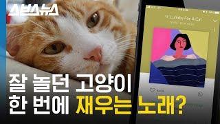 고양이 자장가 맛집 에픽하이 'Lullaby For A Cat'에 담긴 비밀 / 스브스뉴스