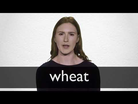 French Translation Of Wheat Collins English French Dictionary