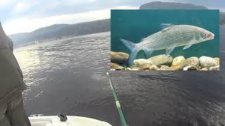 Зимняя рыбалка на телецкое озере