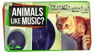 Do Animals Appreciate Music? - Video Youtube
