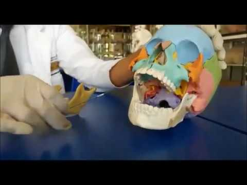 Tratamiento de la hernia espinal en Ayurveda.
