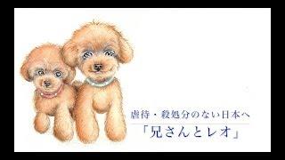 〜虐待・殺処分のない日本へ〜「兄さんとレオ・動画」