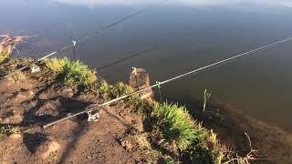 Отчет о рыбалке пруд фишка петряиха