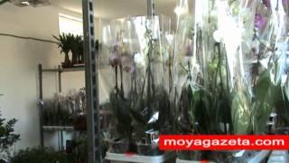 Кімнатні та садові рослини, квіти