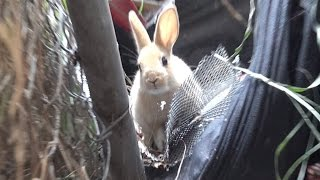 Download Youtube: Hope For Paws rescuing a cute little bunny!!  Please share so we can find her a home.