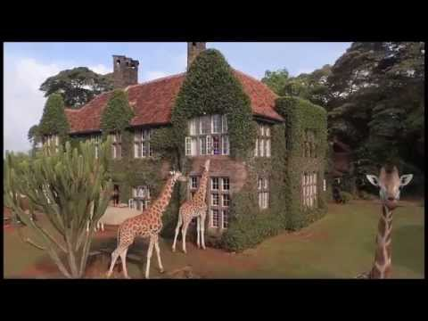 The iconic Giraffe Manor, located in Nairobi, Kenya should be on everyone's bucket list. Sharing your breakfast with the endangered Rothschild Giraffe is an incredible, totally unique experience. When planning your safari it is the perfect start or finish to what will undoubtedly be a magical trip.