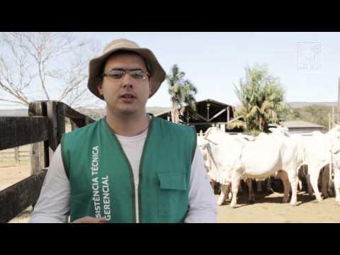 SENAR em Campo: Bovinocultura de Corte – Controle de berne, Carrapato e mosca dos chifre
