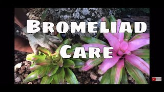 All About Bromeliads Indoor & Outdoor Bromeliad Care