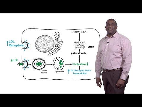 Hpv virus and saliva
