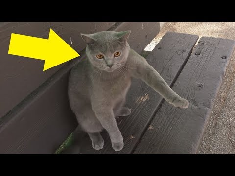 After A Flock Of Ducks Stole This Cat's Treats, The Kitty Enacted The Most Outrageous Revenge