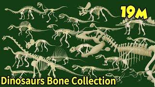 Study dinosaur bone fossils|What shape are dinosaur bones?|What did the dinosaurs eat?|공룡의 뼈 화석 모음집