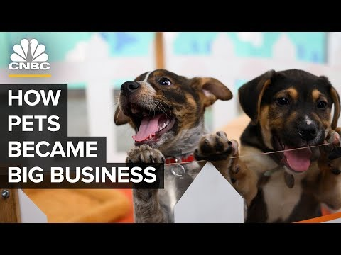 , title : 'How America's Love Of Cats And Dogs Became A $72 Billion Business