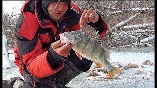 Рыбалка зимой на крупного окуня