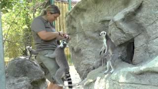 preview picture of video 'Zoo Linz - unser Tiergarten'