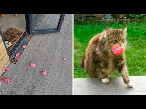Woman Keep Finding Flowers on Her Porch Then She Finally Catches Her Secret Admirer in the Act
