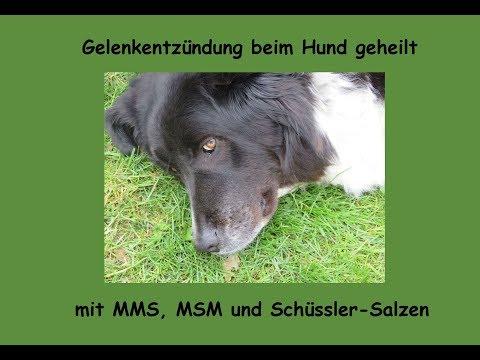 Gelenkentzündung beim Hund erfolgreich alternativ behandelt (MMS, MSM, Schüssler-Salze)