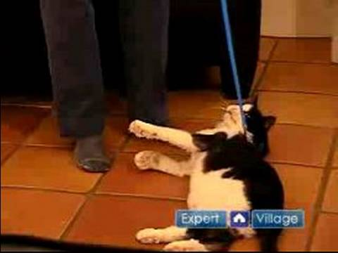 Toy cat on a leash