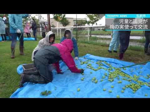 岩木小で児童と園児が梅の実使って交流