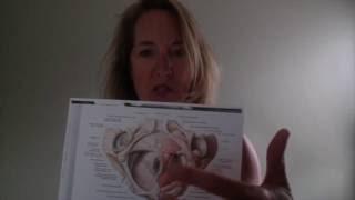 Hemorrhoids after Birth