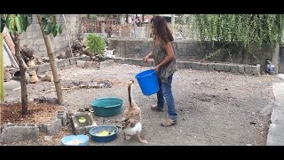 Life In The Province Mindoro + Pampanga