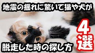 Twitterで話題地震の揺れに驚いて猫や犬が脱走した時の探し方4選!