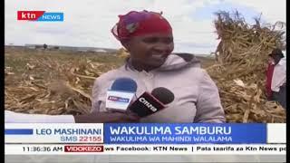 Wakulima wa mahindi katika kaunti ya Samburu walalamika