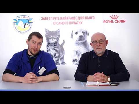 Ветеринарная неврология. Эпилепсия, паралич, парез  и другие проблему ЦНС у животных