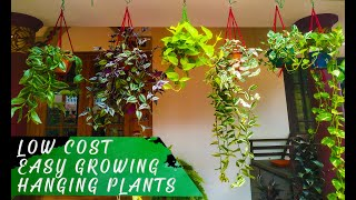 Low Cost,Easy Growing Hanging Plants | Home Garden | Indoor Plants(Malayalam)