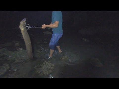 玉平半夜赶海遭遇一条巨鳗,身体都快有手臂粗了,凶猛异常太难抓