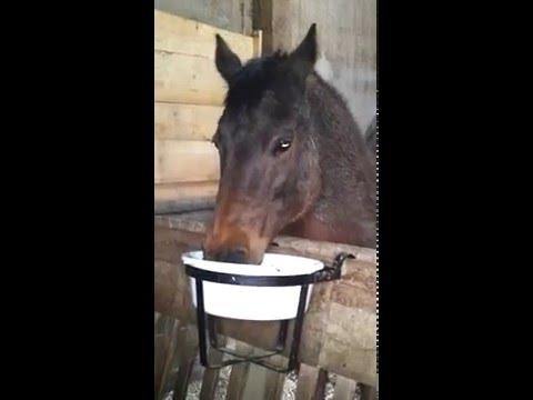 Pferde beim Fressen von Heucobs