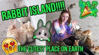EXPLORING JAPANS RABBIT ISLAND!! Everything you need to know about Okunoshima (BUNNY ISLAND!!)