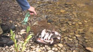 Ловля щуки на зюраткуле летом