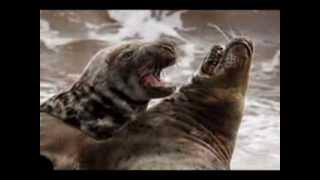 Оригинальные фото красивых диких животных