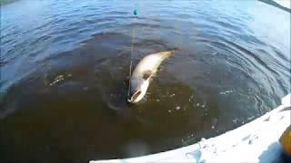 Рыбалка в перми на каме летом