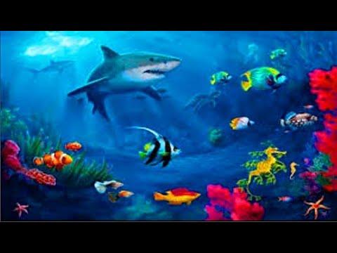 Акула Виды акул 41 факт о Акулах