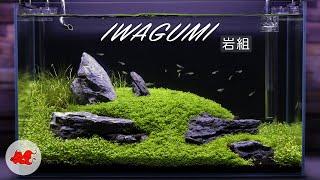 Iwagumi aquascape 60l