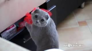 Застукали кота приколы с животными подборка смех до слез 2015 с озвучкой