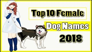 Top 10 Most Popular Female Dog Names 2018 With Meaning