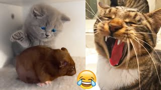 Best Funny Dogs 🐶 And Cats 😹 Videos - Try Not To Laugh!