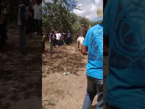Pega de boi no mato em Aquidabã-se  vaqueiros de Japaratuba