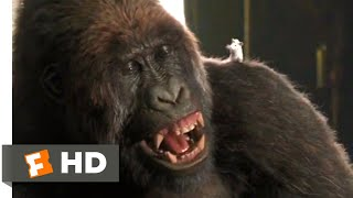 Dolittle (2020) - Gorilla Chess Scene (1/10) | Movieclips