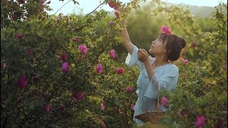 Colorful flowers food, excavating different ways of eating roses缤纷花食,悄悄挖掘玫瑰的不同吃法|Liziqi channel