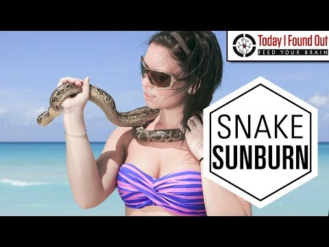 Why Don't Snakes and Many Other Animals Get Sunburned?