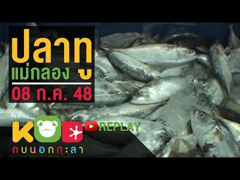 ปลาพยาธิ