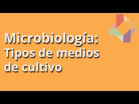 Tipos de medios de cultivo - Microbiología - Educatina