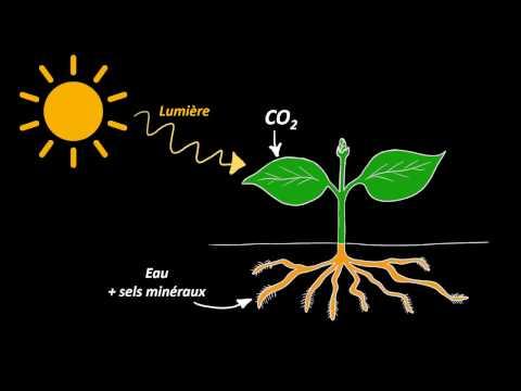 La manucure sur les pieds avec le microorganisme végétal