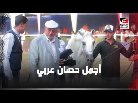 ختام مهرجان الخيول العربية الأصيلة