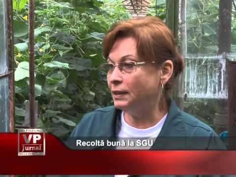 Recoltă bună la SGU